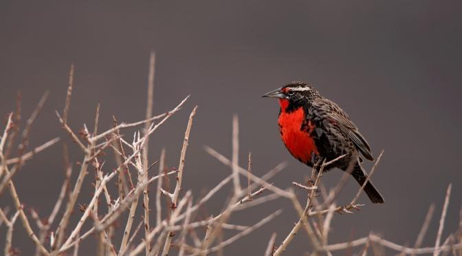 Observación y fotografía de aves